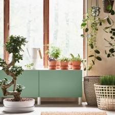 Ikeina zelena oaza